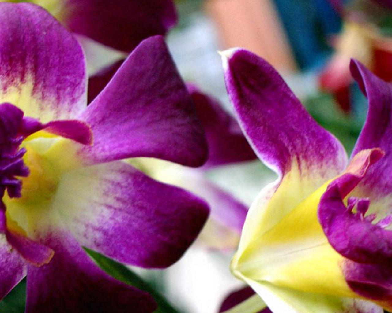 Обои цветы цветы красивые бордо 1280x1024