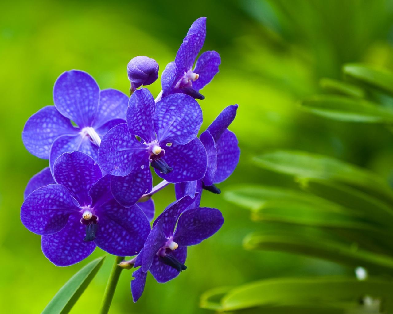 красивые обои цветы орхидеи на рабочий стол на весь экран
