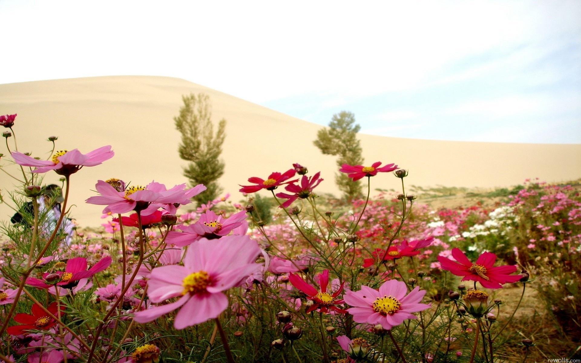 Цветы пустыня дюны песок цветы 1920x1200