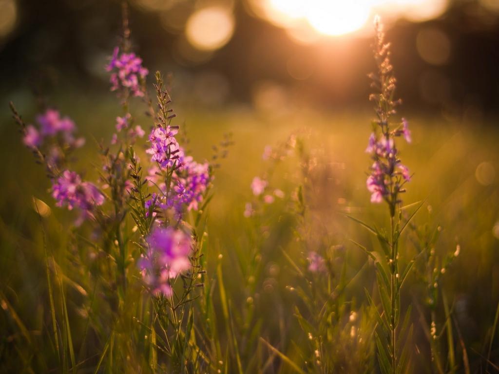 Солнце и цветок картинки 7