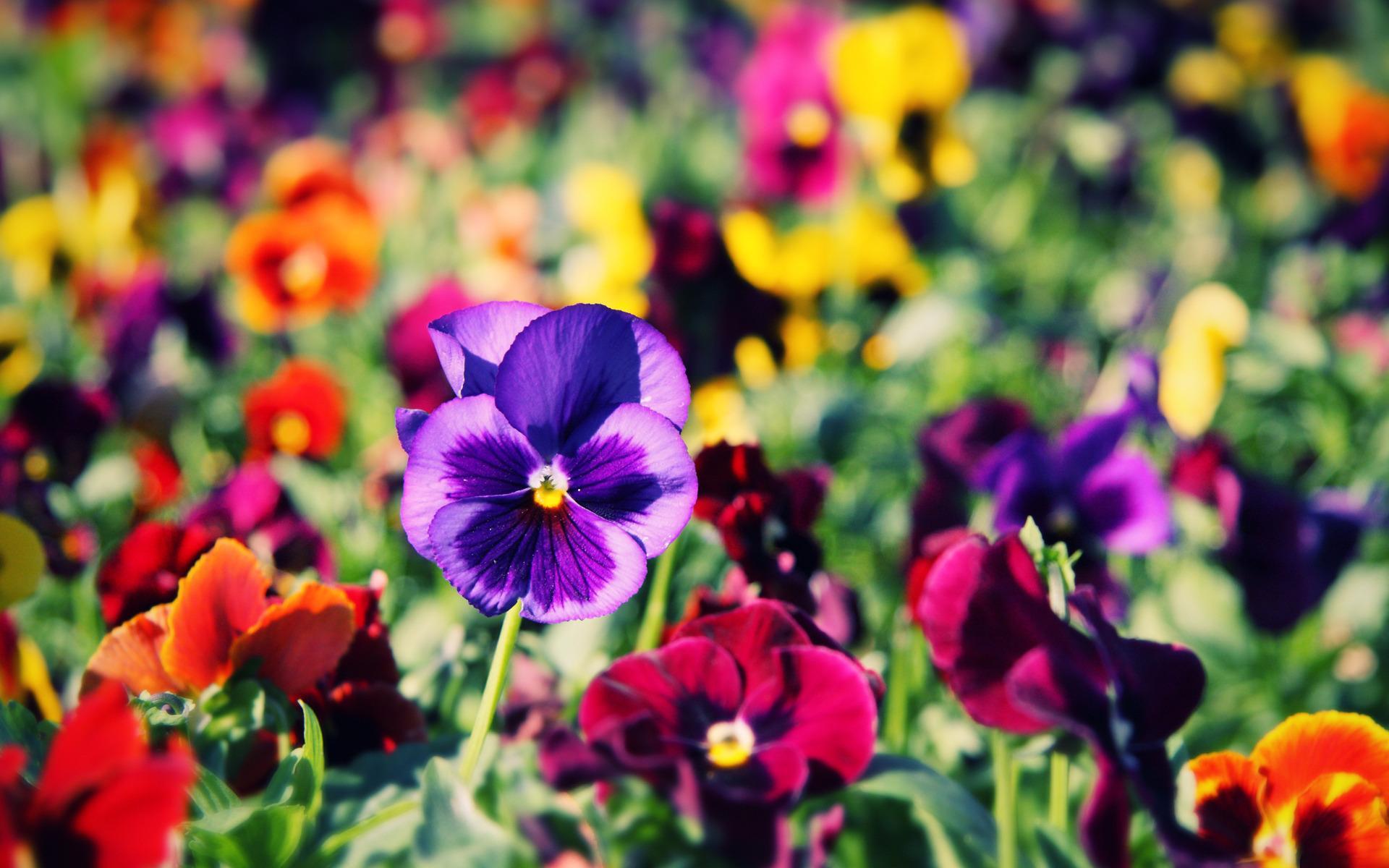 Цветы цветы сады парки леса макро