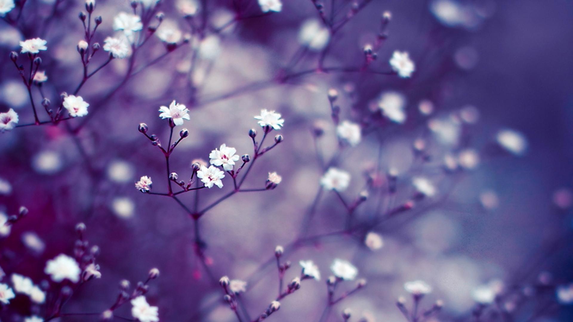 Обои цветок. Макро foto 14