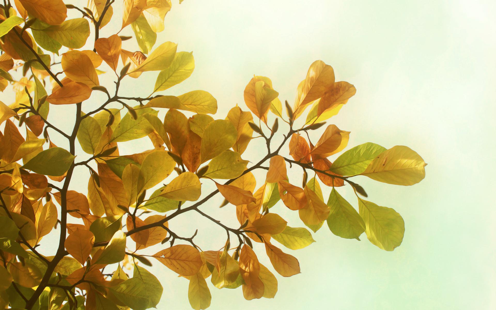 Осень деревья листья ветки природа