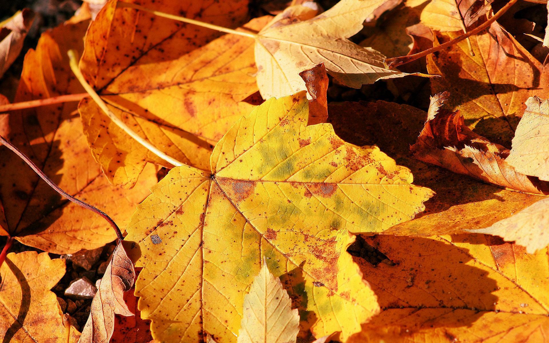 Осень листья листопад обои для