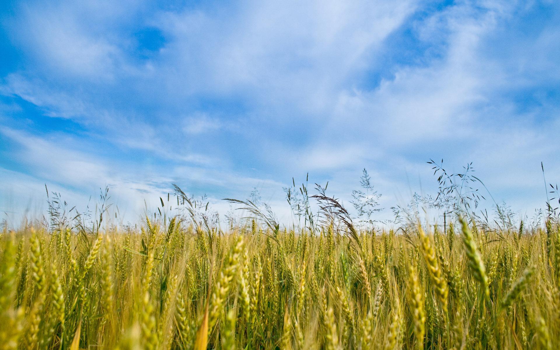 Трава небо голубое облака природа