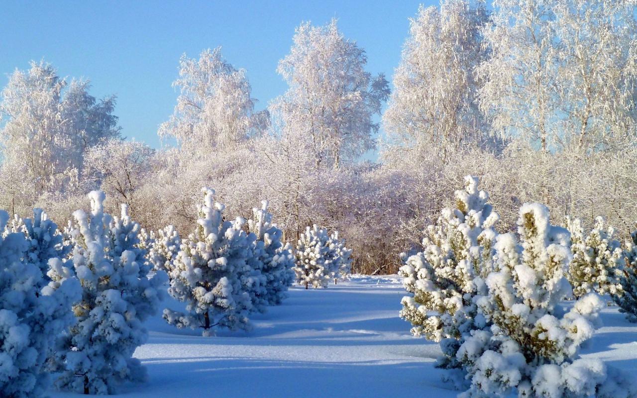 Картинки зимы на экран размером 1280 800