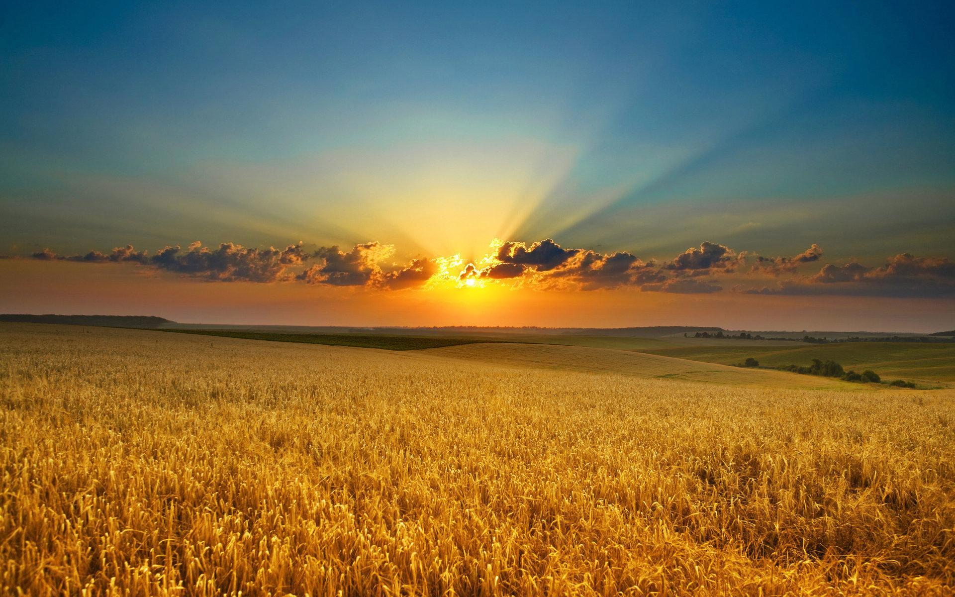 Закат рассвет поле природа красота